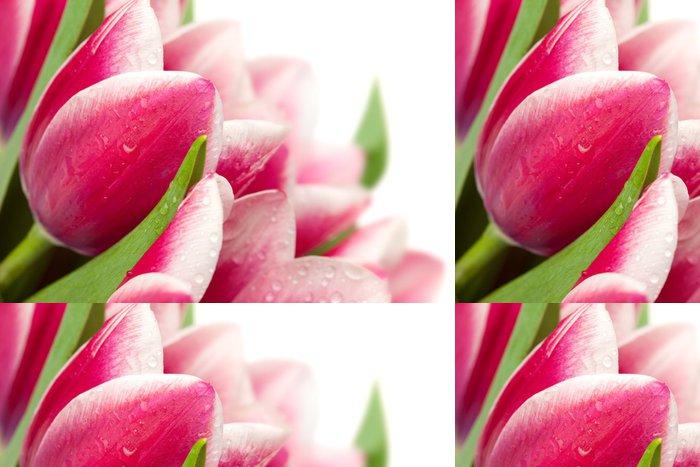 Tapeta Pixerstick Růžové tulipány s kapkami vody na bílém pozadí / copy space fo - Témata