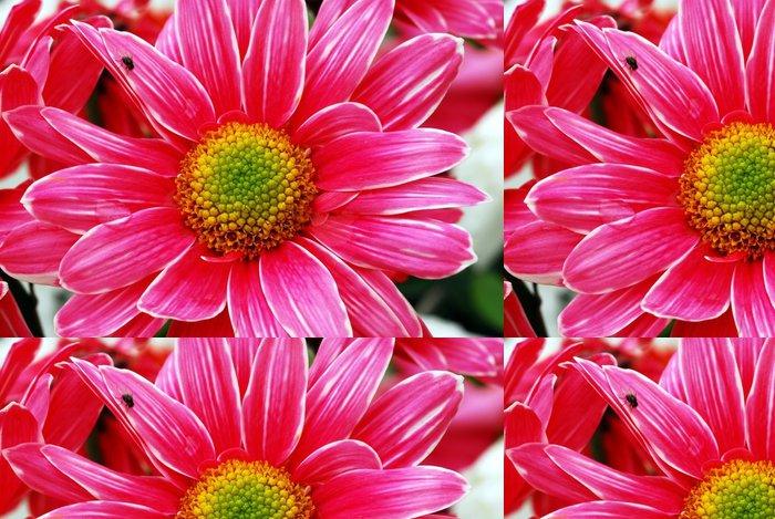 Tapeta Pixerstick Růžový květ sedmikráska - Květiny