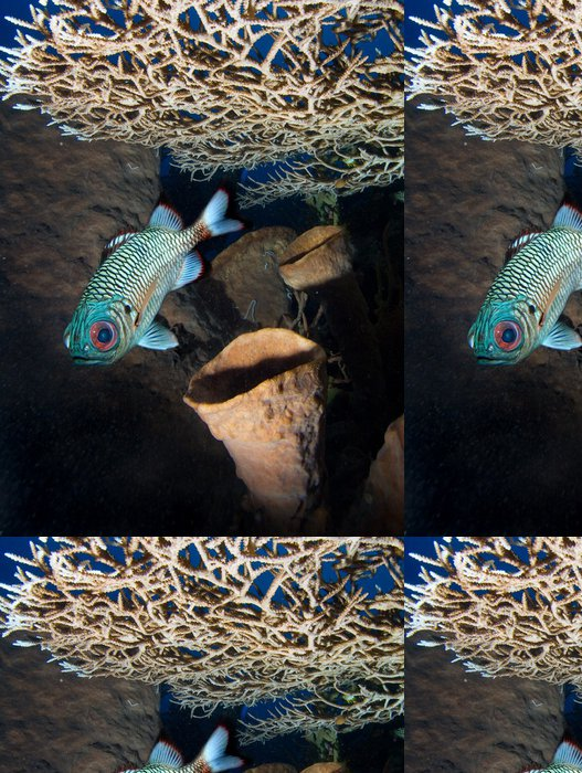 Tapeta Pixerstick Ryby a tvrdě korálů - Vodní a mořský život