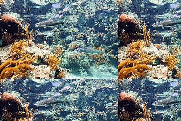 Tapeta Pixerstick Ryby v Karibském moři, Mexiko - Ryby