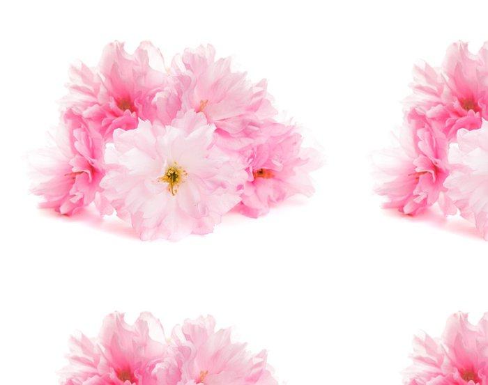 Tapeta Pixerstick Sakura izolované - Květiny