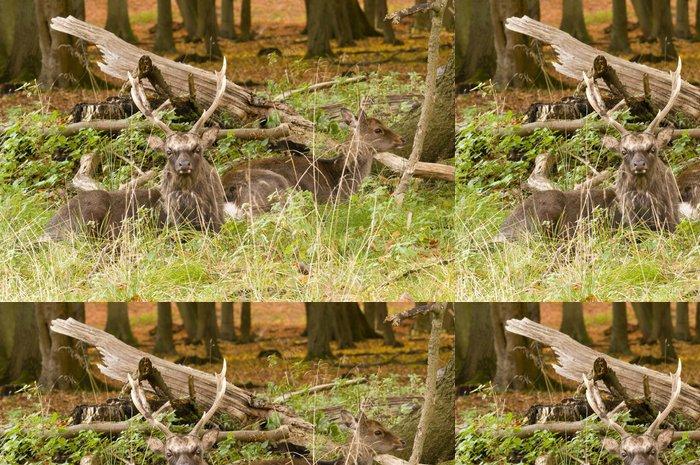 Tapeta Pixerstick Samci a samice jelen sedí na dřevěné zemi na podzim - Roční období
