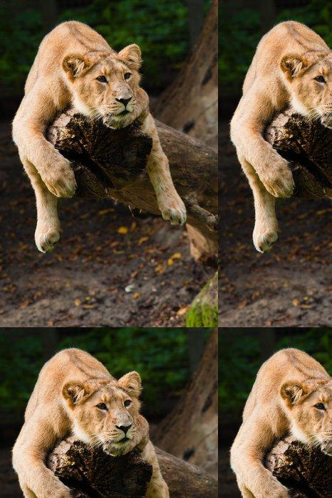 Tapeta Pixerstick Samice lva na stromě - Témata