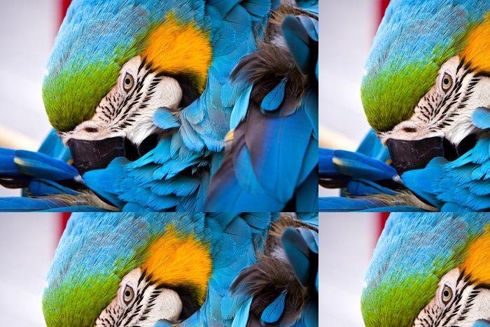 Tapeta Pixerstick Šarlatové macaws, papoušek - Témata