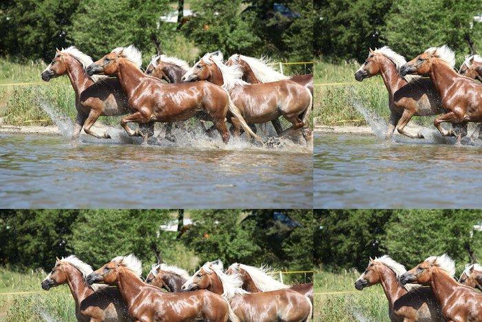 Tapeta Pixerstick Šarže kaštanů koně běží ve napoj - Savci