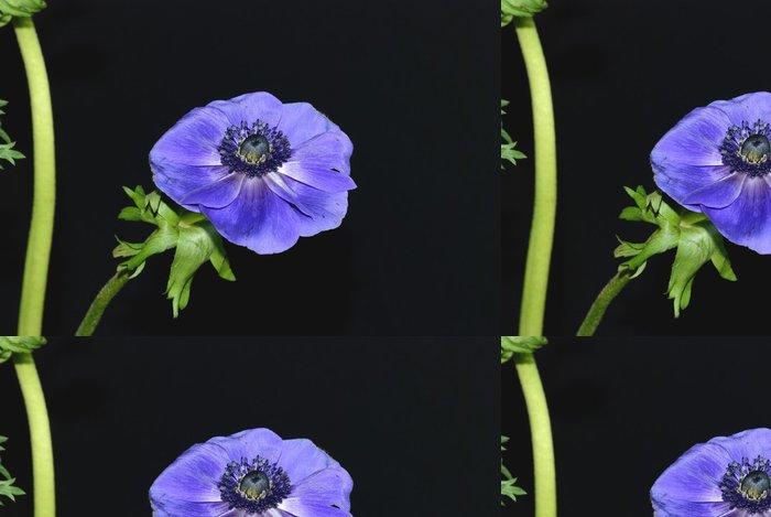 Tapeta Pixerstick Sasanka - Květiny