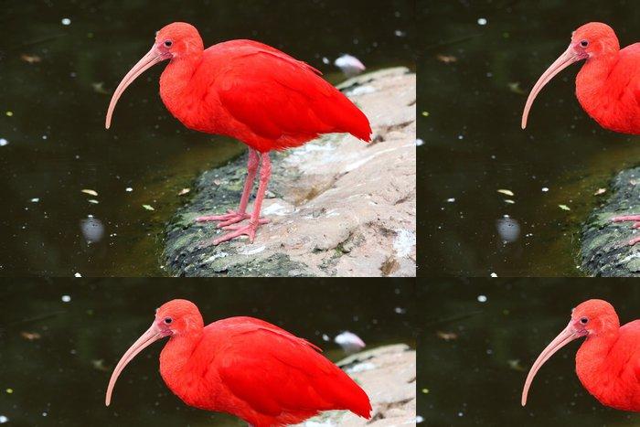 Vinylová Tapeta Scarlet Ibis Bird - Ptáci