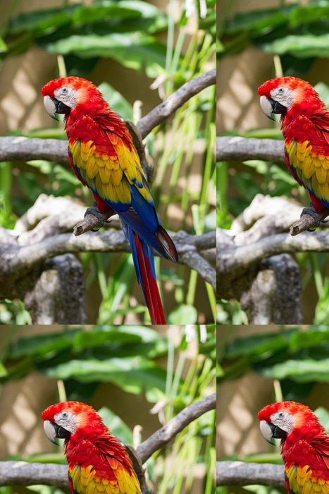 Tapeta Pixerstick Scarlet papoušek v přírodě okolních - Ptáci