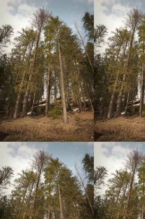 Tapeta Pixerstick Scary Forest - Jiné pocity