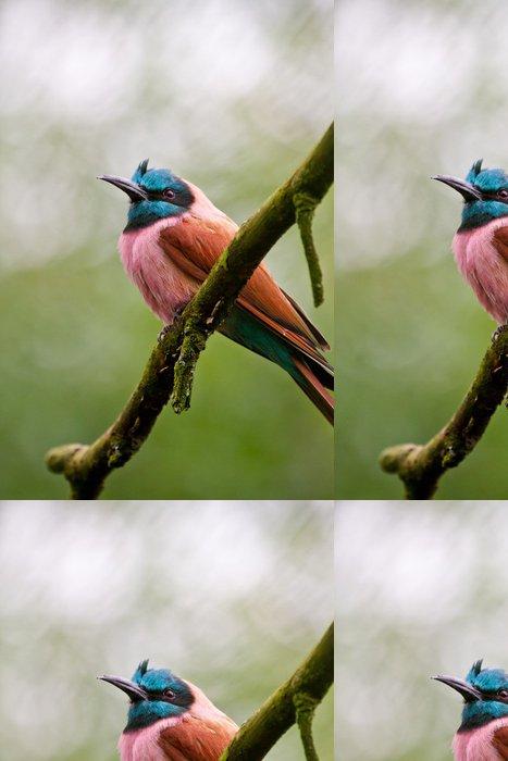 Tapeta Pixerstick Scharlachspint (Merops nubicus) - Ptáci