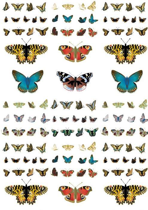 Tapeta Pixerstick Schmetterlinge sammlung02 - Roční období