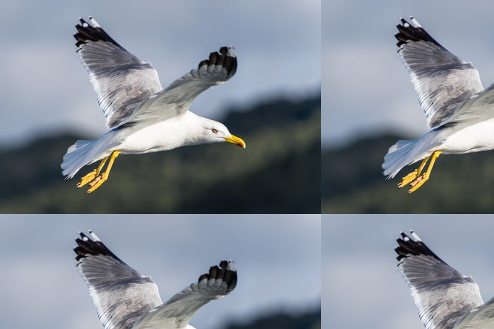 Tapeta Pixerstick Seagull pták létání - Ptáci