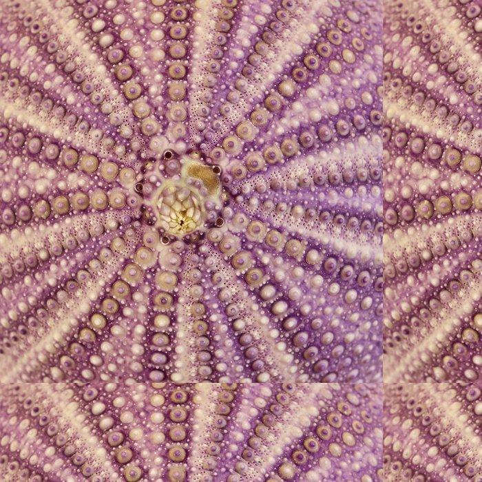 Tapeta Pixerstick Seaurchin detailní, přírodní pozadí - Pozadí