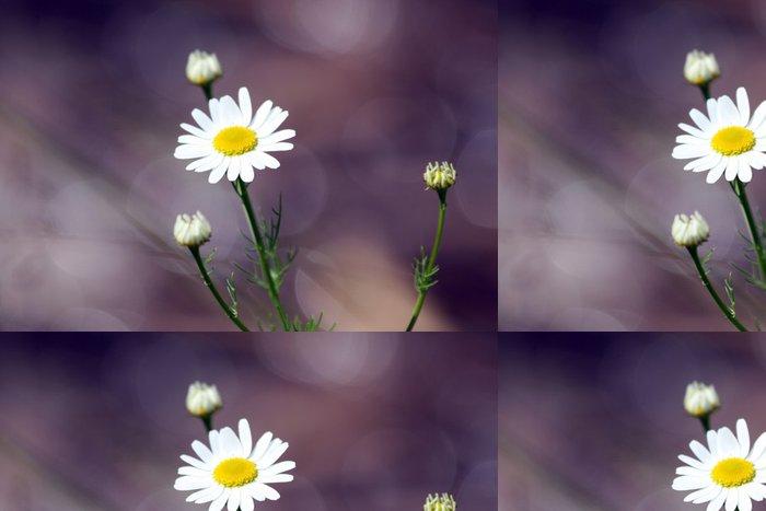 Tapeta Pixerstick Sedmikrásky - Květiny
