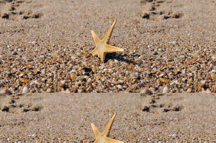 Tapeta Pixerstick Shell v moři - Prázdniny