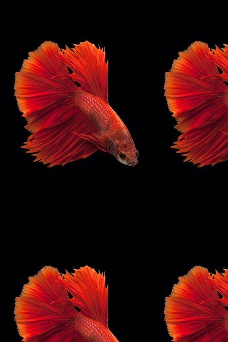 Vinylová Tapeta Siamská boje ryby - Vodní a mořský život
