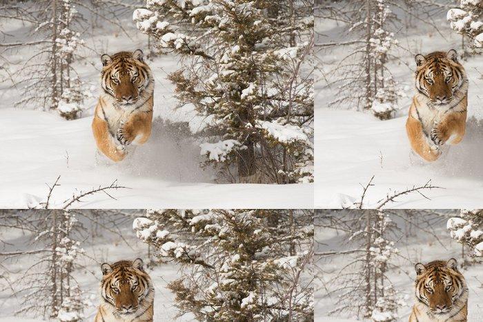 Tapeta Pixerstick Sibiřský tygr Běh ve sněhu - Témata
