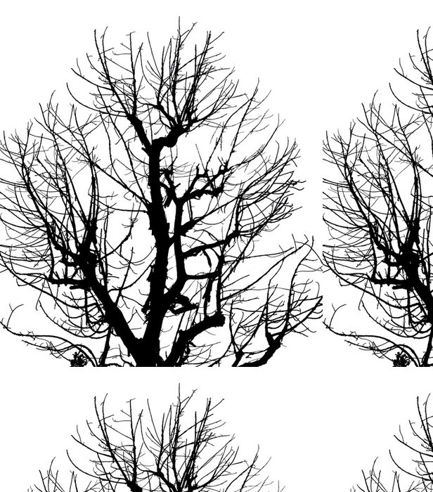 Tapeta Pixerstick Silueta Mrtvý strom na izolované bílém pozadí - Úspěch