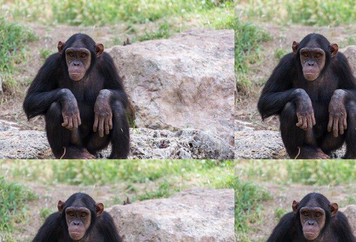 Tapeta Pixerstick Šimpanz sedí na kamenech - Savci