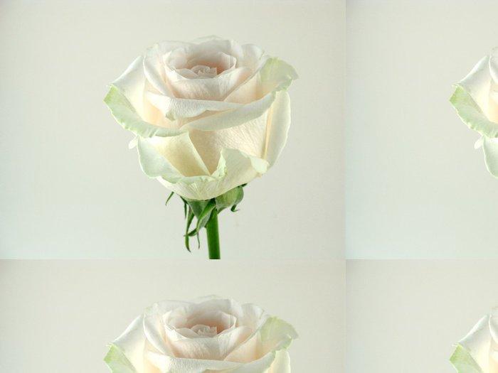 Tapeta Pixerstick Single bílé růže zblízka - Štěstí