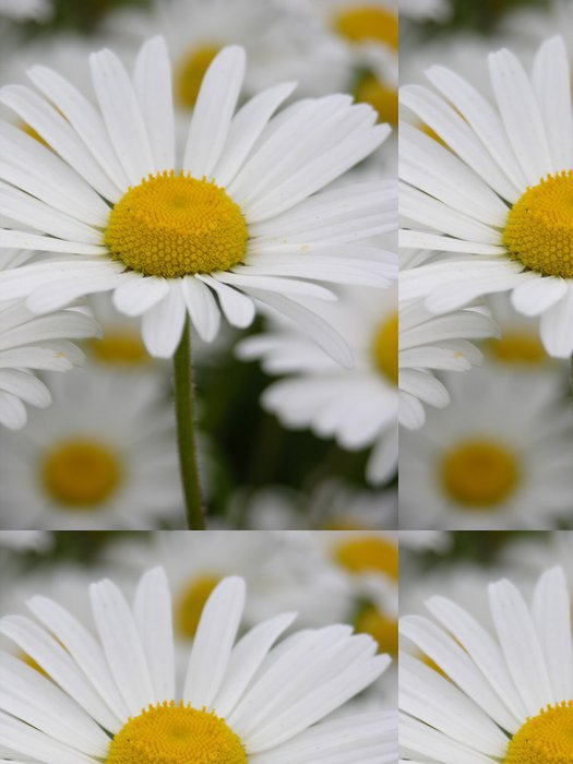 Tapeta Pixerstick Single daisy - Květiny