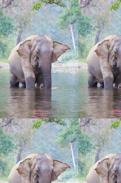 Tapeta Pixerstick Single Slon v řece - Savci