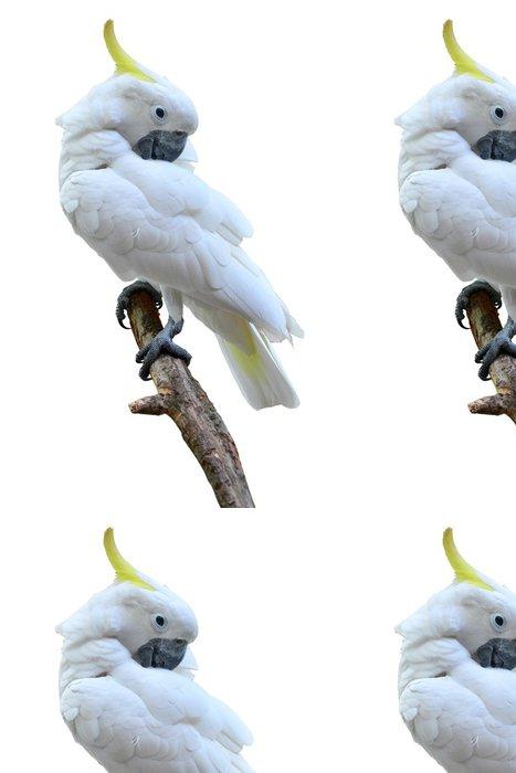 Vinylová Tapeta Síra chocholatý kakadu - Nálepka na stěny