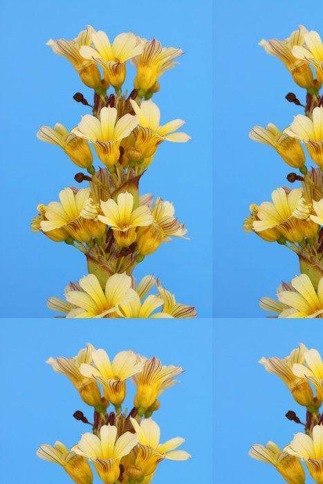 Vinylová Tapeta Sisyrinchum striatum - Květiny