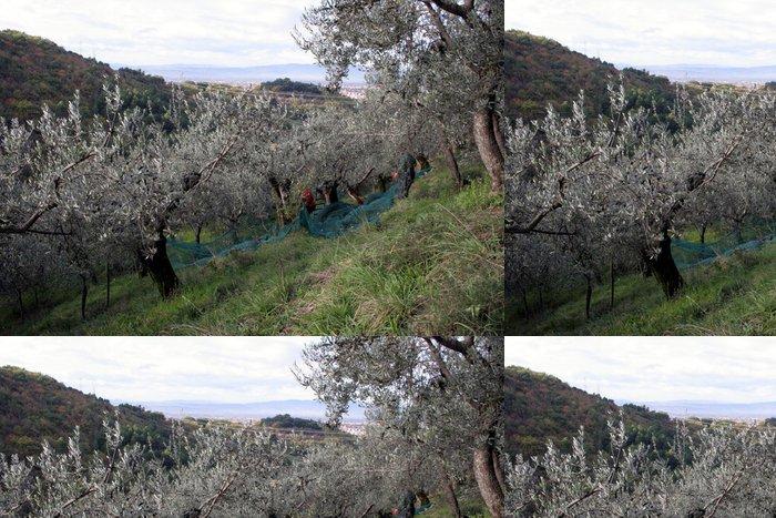 Tapeta Pixerstick Sklizeň oliv - Zemědělství