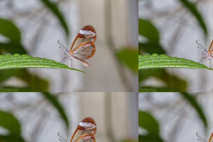 Tapeta Pixerstick Sklo Wing Butterfly - Ostatní Ostatní