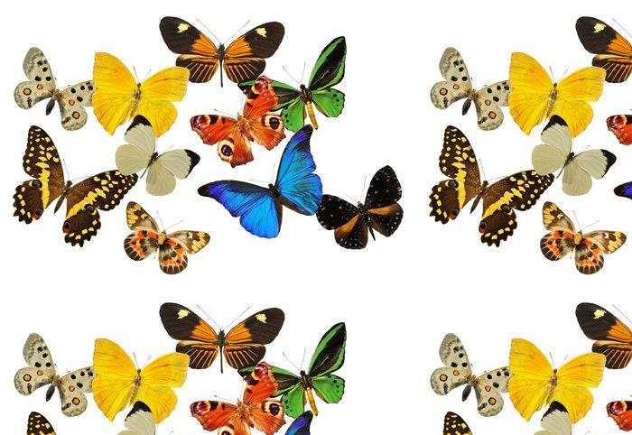 Tapeta Pixerstick Skupina motýlů - Ostatní Ostatní