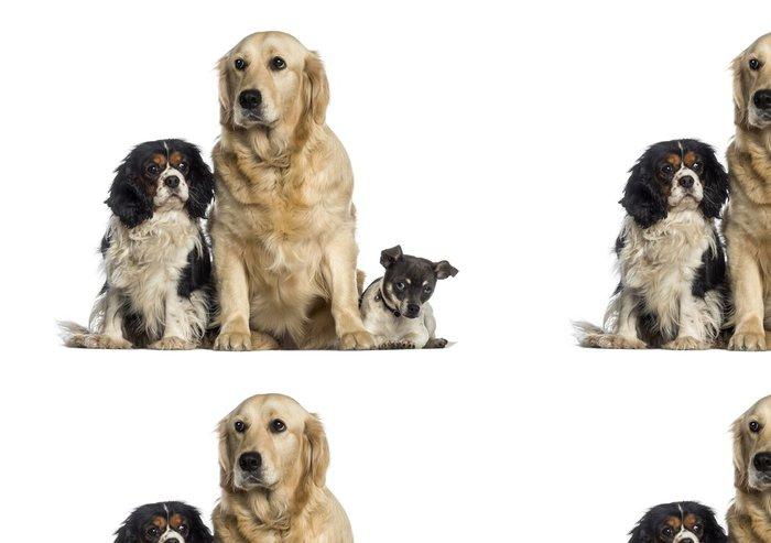 Tapeta Pixerstick Skupina psů seděli pohromadě -