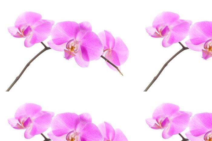 Tapeta Pixerstick Skupina růžové květy orchidejí na bílém pozadí - Nálepka na stěny