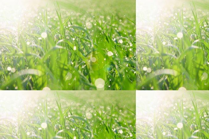 Tapeta Pixerstick Skvrny světla od rosy na trávě - Venkov