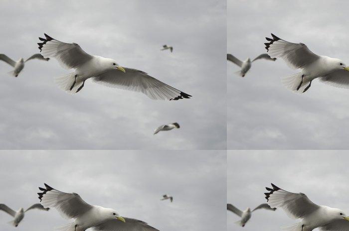 Tapeta Pixerstick Sleď rackové na obloze - Ptáci