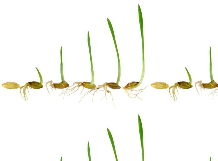 Vinylová Tapeta Sledování stéblo trávy Grow - Ekologie