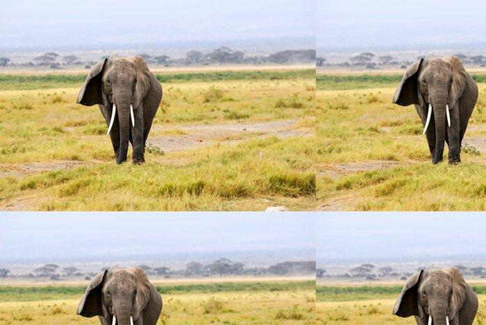 Tapeta Pixerstick Slon africký - Prázdniny