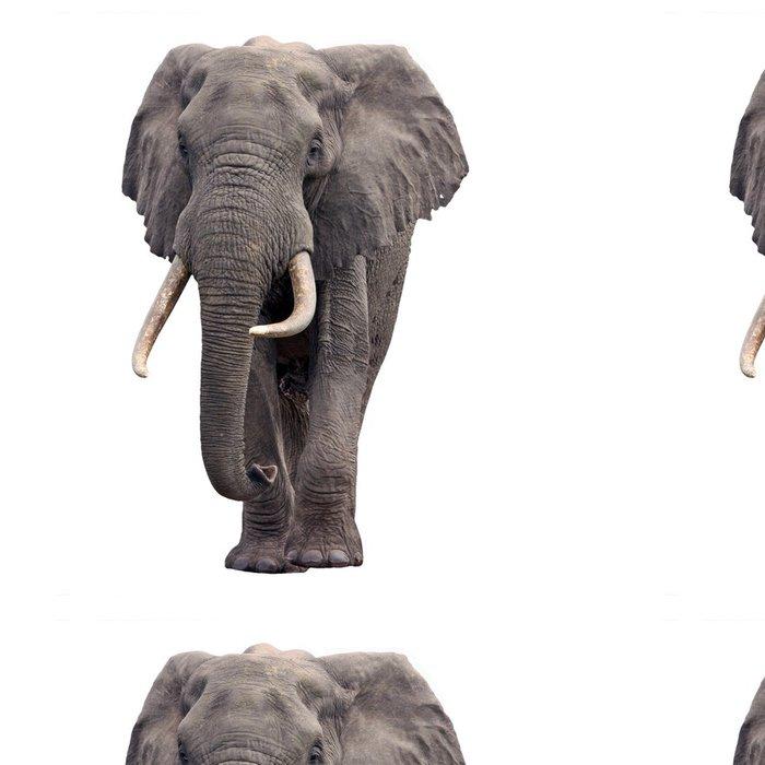 Tapeta Pixerstick Slon chůzi izolované - Nálepka na stěny