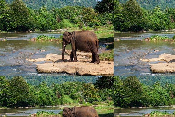 Tapeta Pixerstick Sloni z Pinnawala sloní sirotčinec koupání v řece - Témata