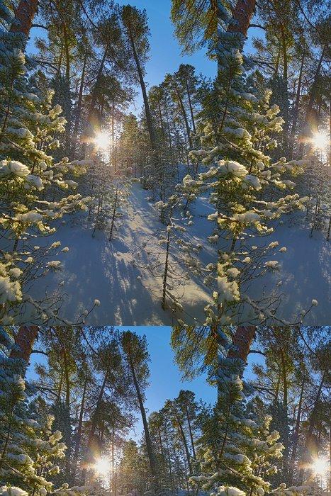 Tapeta Pixerstick Slunce ve sněhu borovém lese - Lesy