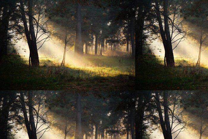 Vinylová Tapeta Sluneční paprsky v mlze v lese - Témata