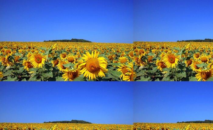 Tapeta Pixerstick Slunečnice a nebe - Zemědělství