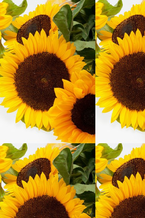 Tapeta Pixerstick Slunečnice izolovaných na bílém pozadí - Témata