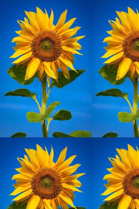 Tapeta Pixerstick Slunečnice za slunečného dne s rosy na okvětních lístků - Témata