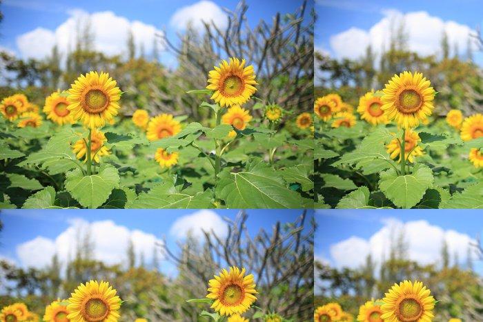 Tapeta Pixerstick Slunečnice - Květiny