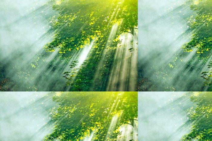 Tapeta Pixerstick Slunečnímu záření mlha les - Roční období