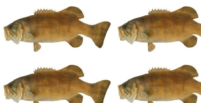 Tapeta Pixerstick Smallmouth Bass profil - Nálepka na stěny