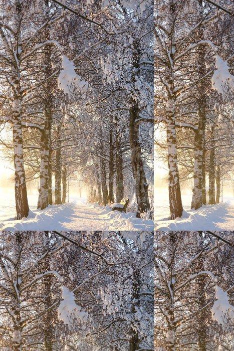 Vinylová Tapeta Snowy, Sunny Birch Path IV - Lesy