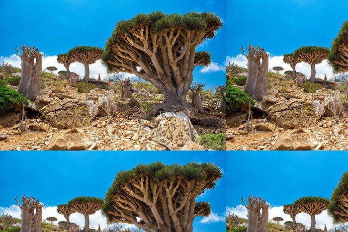 Vinylová Tapeta Sokotra Homhil drak strom - Ostrovy