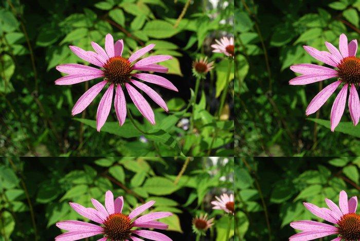 Vinylová Tapeta Sonnenhut - Květiny